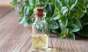 Boost Overall Health With Oregano Oil