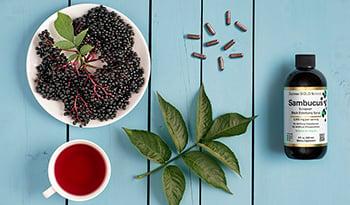 深入了解接骨木果及其對健康的4大益處