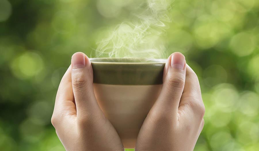 Fungiology Reishi Hot Tea Recipe
