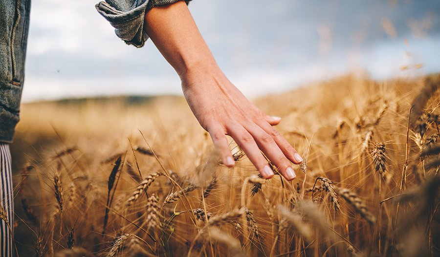 Woman walking through wheat field with hand outstretched touching grass