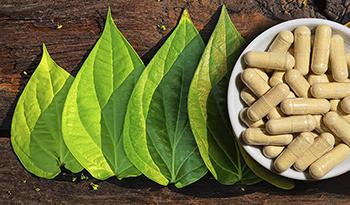 Kava-Kava – eine vielversprechende angstlösende Heilpflanze