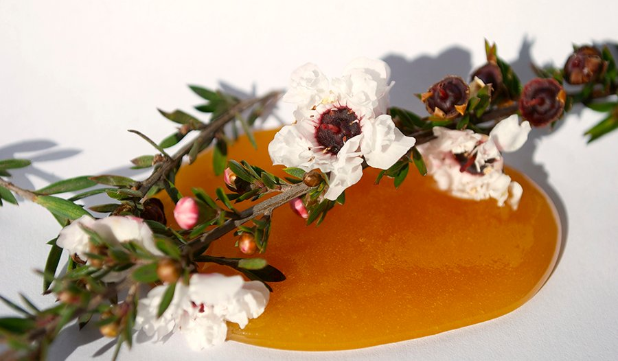 Manuka honey and flower on white background