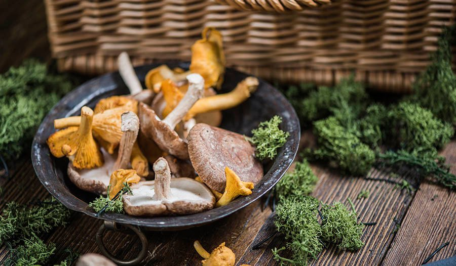 Mushrooms for Immunity and Whole Body Health