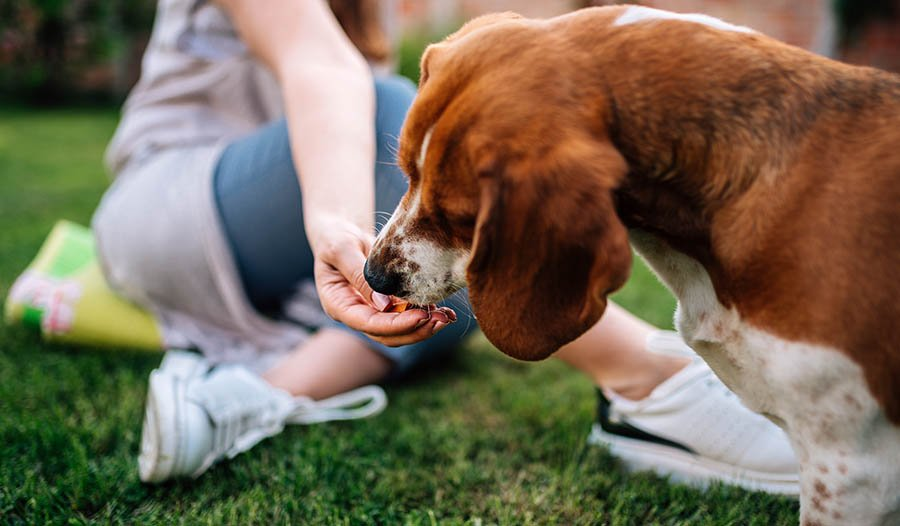 The Benefits of Natural Pet Foods and Products