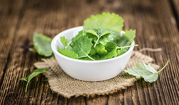 Nine Health Benefits of Lemon Balm