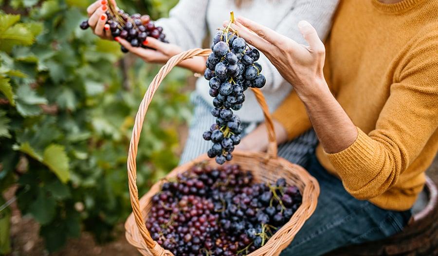 Resveratrol: A Powerful Antioxidant That Might Benefit Mental Health