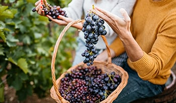 Resveratrol: A Powerful Antioxidant That Might Benefit Mental Health