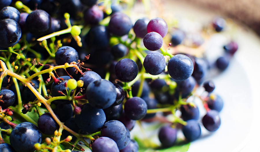 Bunch of purple grapes on a plate