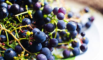 New Study Dives Into Resveratrol and Brain Health