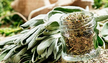 The Health Benefits of Sage and Burning Sage to Cleanse your Space