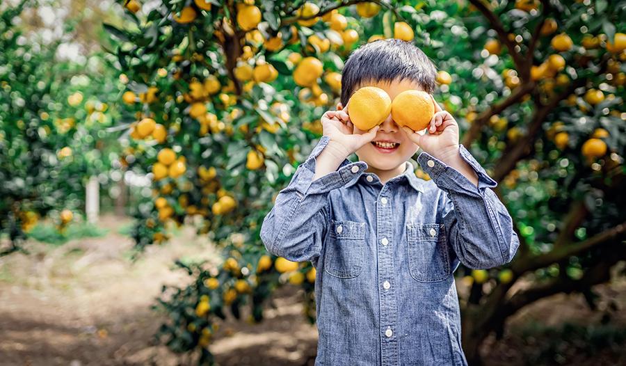 Asian boy playing in orange grove holding oranges