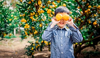 Asian boy playing in orange grove holding oranges