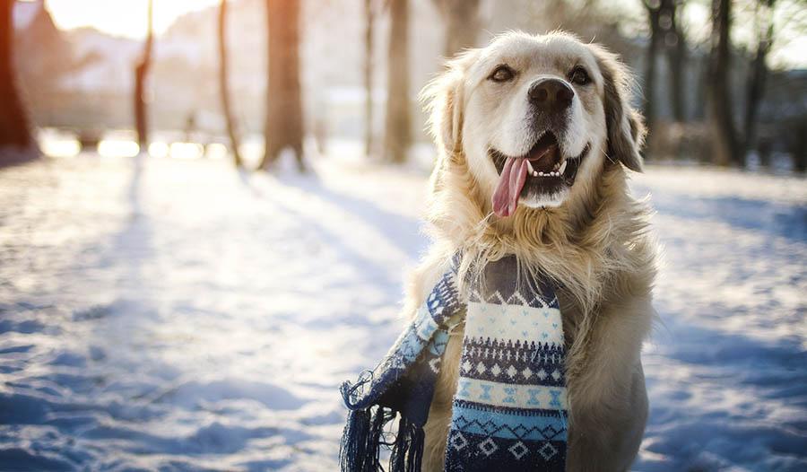 Winter Pet Health Tips