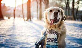 Winter Pet Health Tips