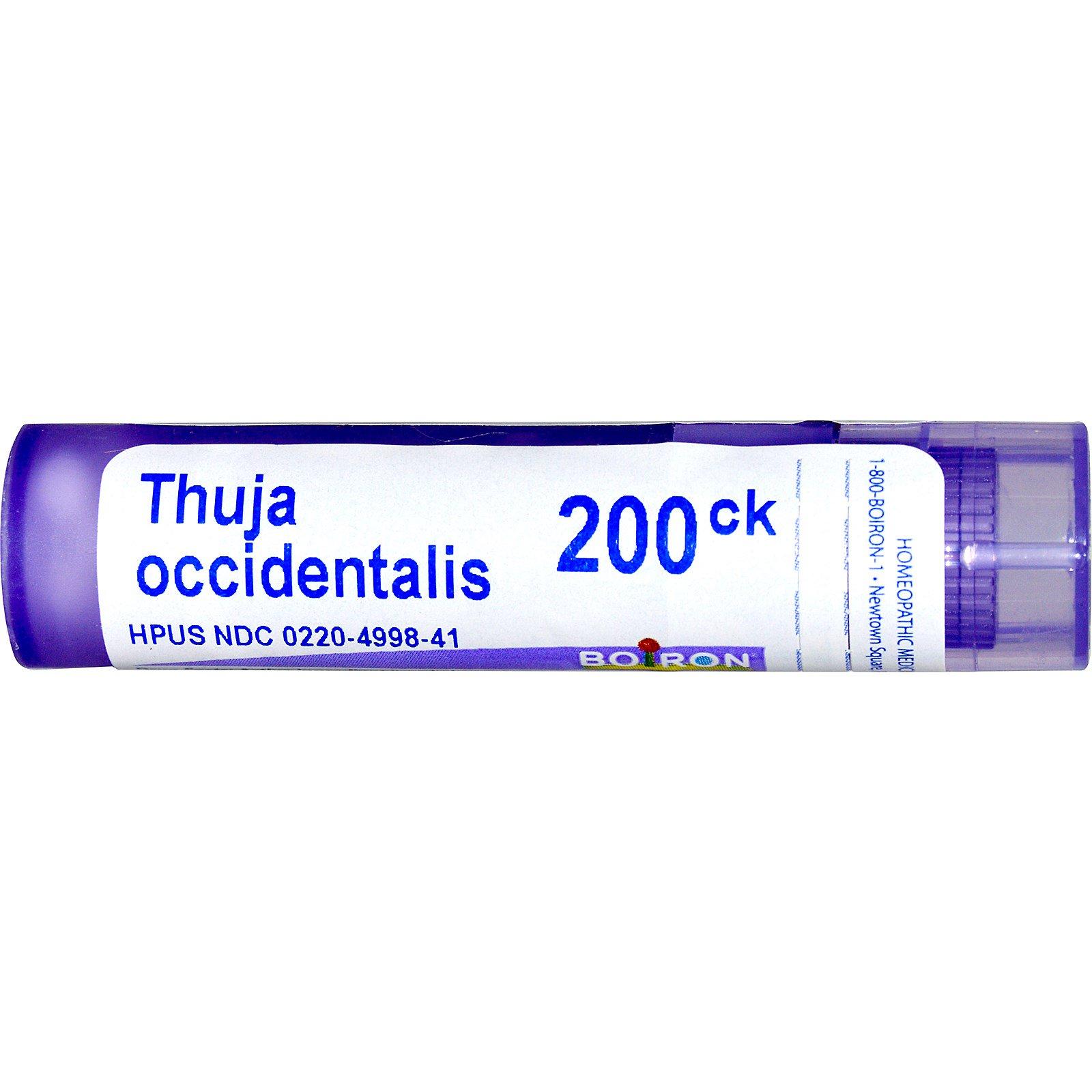 Boiron, Single Remedies, Thuja Occidentalis, 200CK, 80 Pellets