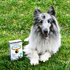 California Gold Nutrition, LactoBif Pet Probiotics, 5 Billion CFU, 60 Veggie Capsules