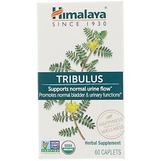 Himalaya, Tribulus, 60 Caplets