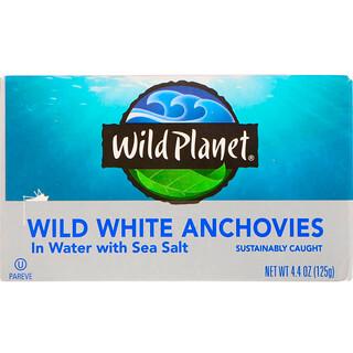 Wild Planet, الأنشوجة البيضاء البرية في الماء بملح البحر، 4.4 أوقية (125 غرام)